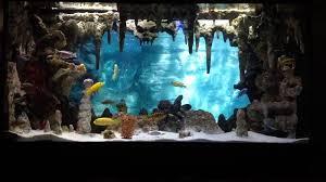 beautiful fish tank background diy images ideas underwater cavern aquarium with