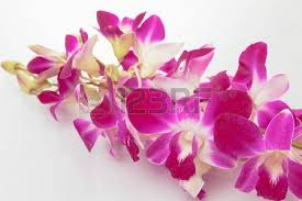 orchid purple color. Interesting Purple Stock Photo  Thailand Orchid Purple Color Isolated On White Background  With Free Space At Right Side For Designer  Vintage Style Inside Orchid Color I