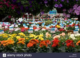 california pack trials annual flower display at goldsmith seeds gilroy