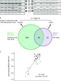 Aaa 2 Venn Diagram Rna Seq Of Rbfoxi Transfected U87mg Cells A Rt Pcr Of