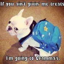 Going to Grammas quotes cute memes animals quote adorable dog ... via Relatably.com