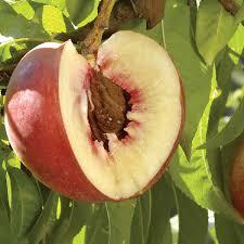 Home Orchard Management  Royal Oak Farm Orchard 032116Dormant Fruit Trees