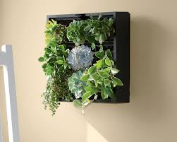 excellent inspiration ideas living herb wall walls bring container gardening indoors woolly pocket planter