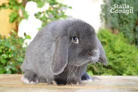 La stalla dei conigli allevamento e vendita conigli nani ariete