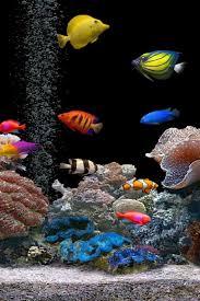 3d fish wallpaper.  Fish 3D Live Fish Wallpaper  Free Download Of Android Version  M1mobilecom Inside 3d