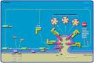 adp-ribosylation factor 1