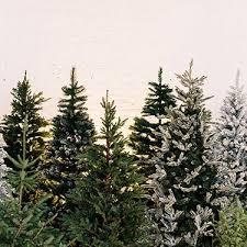 <b>Christmas Trees</b> - Decorated & Undecorated <b>Christmas Trees</b> ...