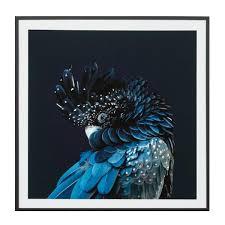 australian cockatoo framed print