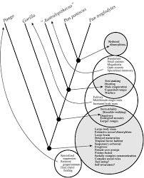 Cladogram and venn diagram showing evolutionary relations among living hominids