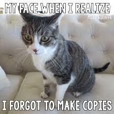 Miss Giraffes Class Funny Cat Teacher Pictures
