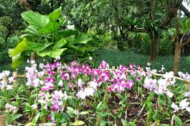 xinglong tropical botanical garden hainan island