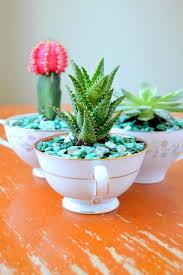 teacup succulent planter
