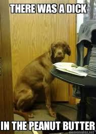 Discontented dog - Imgur via Relatably.com