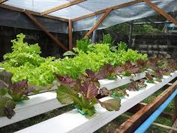 hydroponics garden. Image May Contain: Plant, Flower, Outdoor And Nature Hydroponics Garden N