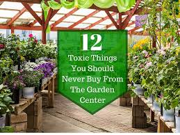 12 things never at a garden center