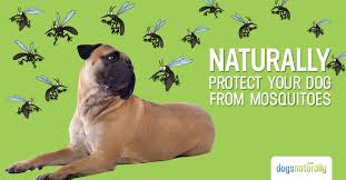 naturally protect your dog from mosquitoes dnm