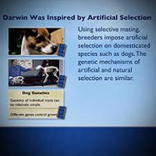 .artificial selection (answer key) download student exploration: Natural And Artificial Selection