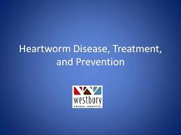 natural heartworm treatment. Natural Heartworm Treatment 1 Disease And Prevention Reviews