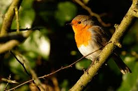 Image result for beautiful bird on a tree at early morning