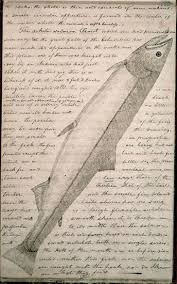 along western trails part the lewis and clark expedition  white salmon trout from the journals courtesy of the american philosophical society