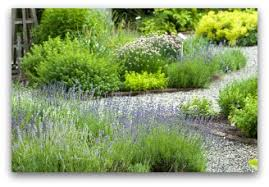 how to grow a herb garden. Herb Plants Added To A Flower Border How Grow Garden