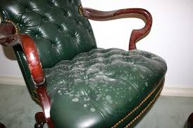 Small Picture Remove All Stainscom How to Remove Mold from Leather