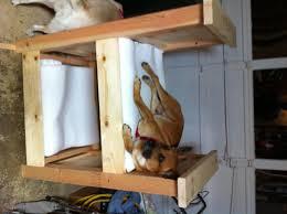 Dog bedroom furniture Giant Dog Dog Bunk Beds Bedroom Furniture Korrect Kritters Dog Bunk Beds Furniture Korrectkritterscom