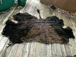 huge tanned bison buffalo skin hide log cabin western hunting lodge taxidermy