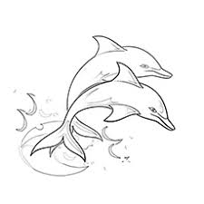 dolphin pictures for coloring 2. Brilliant For Soaring Two Dolphin Coloring Sheet Throughout Pictures For 2 MomJunction