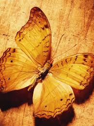 Beautiful Butterfly On Wood Mobile ...
