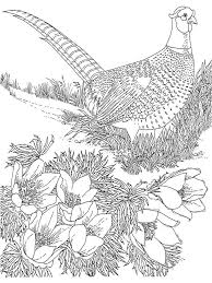 Small Picture Pheasant Animal Coloring Pages Pheasants Birds 8 nebulosabarcom