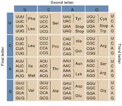 Plasmids 101 Codon Usage Bias