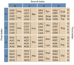 Trna Codon Chart Plasmids 101 Codon Usage Bias