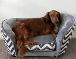 aldi releases tiny dog sofas that every
