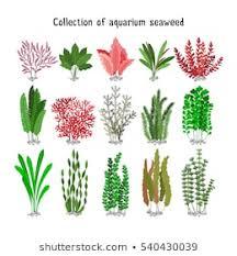 Aquatic Plants Images Stock Photos Vectors Shutterstock