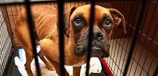abused animals. Fine Animals Report Animal Cruelty On Abused Animals E