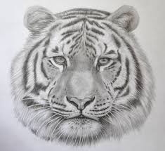 realistic animals to draw. Simple Realistic Howtodrawanimalsrealistic_tiger_drawing_in_pencil With Realistic Animals To Draw