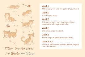 Kitten Size Chart Kitten Development In The First Six Weeks Of Life