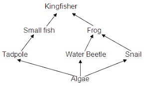food web pyramid food chains food webs biomass pyramids and cycles qld science