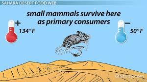 the food web of the sahara desert video lesson transcript study