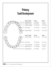 Permanent Teeth Eruption Chart Timing For Teeth Everything You Need To Know About Your