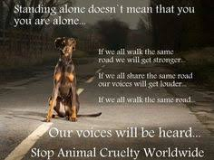 Let's end animal cruelty! on Pinterest | Stop Animal Cruelty ...