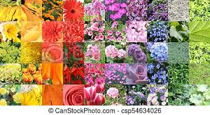Composite Color Chart Collage Of A Large Variety Of Flowers And Plants
