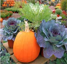 How To Get The Absolute Most Out Of Your Fall Garden  Off The Fall Gardening
