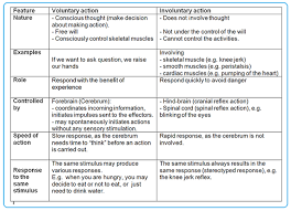 Voluntary Involuntary Actions Biology Notes For Igcse 2014