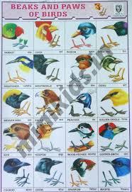 Bird Beak Chart Beaks And Paws Of Birds Chart Number 10 Minikids In