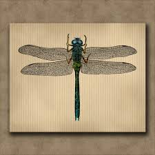 dragonfly print vine insect engraving