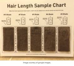 Hair Length Sample Chart The Puppy Cut Healthy Pet Supplies Grooming Training