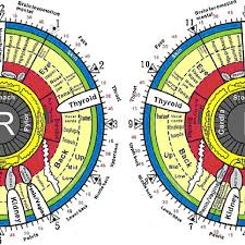 The Iridology Chart For Both The Right And Left Irises
