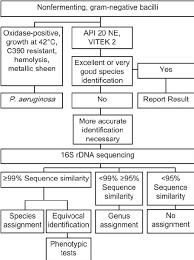 Gram Negative Bacteria Chart Algorithm For The Identification Of Nonfermenting Gram